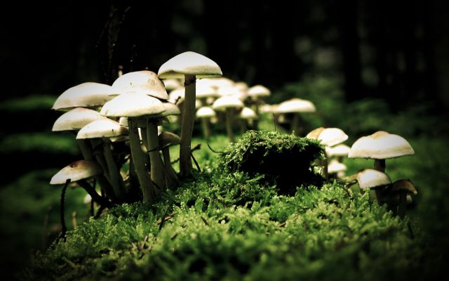 ciuperci magice