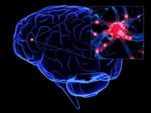 plasticitatea creierului