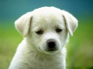 Puppy-3-dogs-1993798-1024-76811
