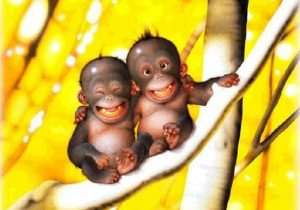 baby-monkeys