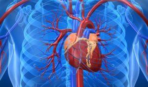sistemul cardio