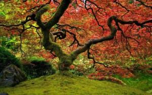 Big-Tree-Moss-900x1440