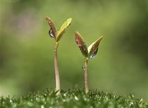 Wet Seedling