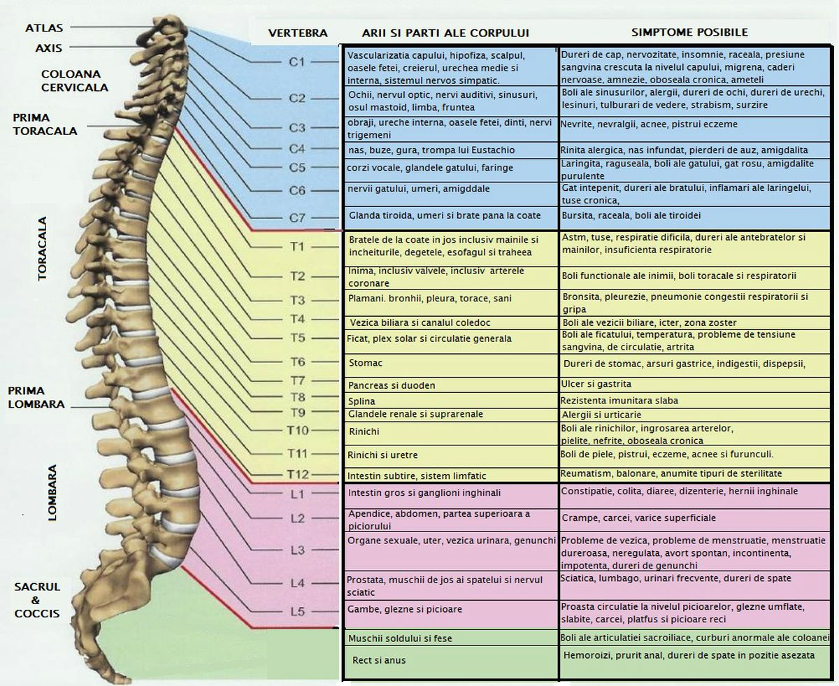 Cu durere vasculara la nivelul coloanei vertebrale