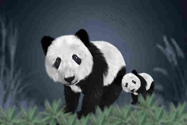 Afla cat de buna iti e vederea! 90% dintre cei care incearca nu pot gasi ursul panda ascuns in imagini!