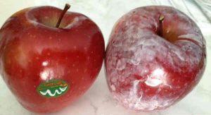 ceara pe mere
